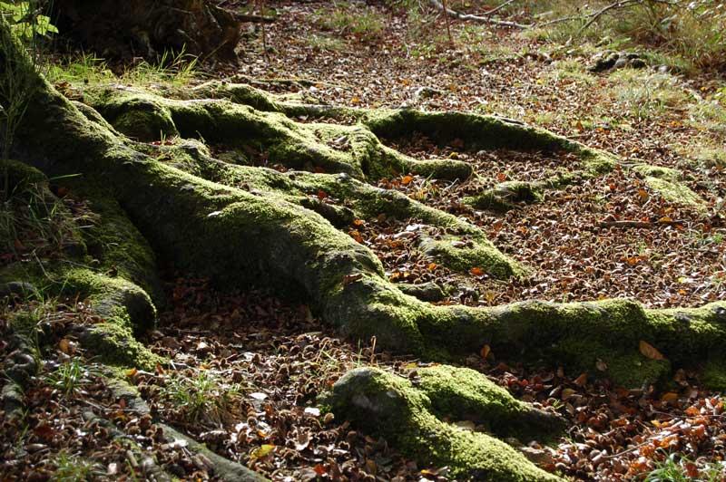 arbre-broceliande-bretagne-secrete