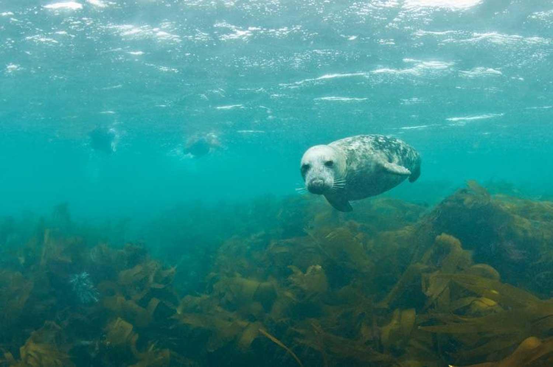 nager-avec-les-phoques-bretagne-secrete