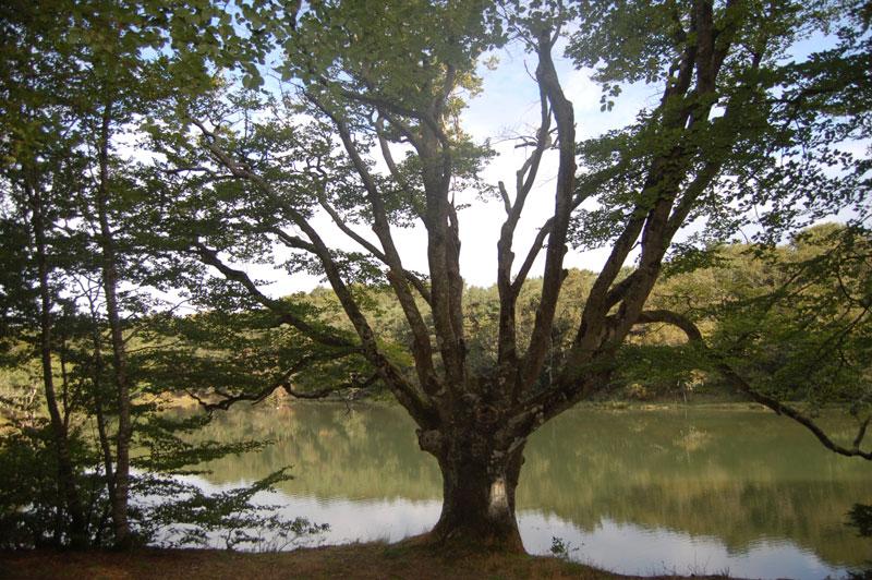arbre-druide-bretagne-secrete
