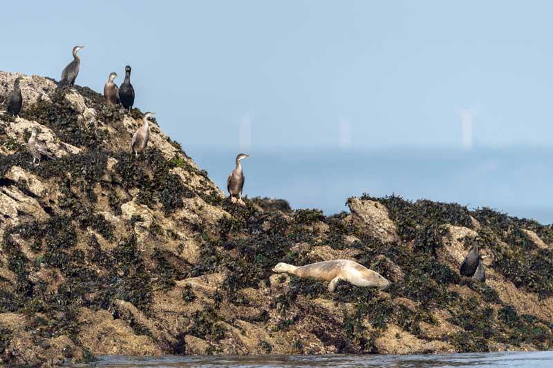 phoques-cormorans-bretagne-secrete