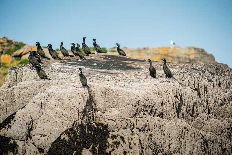 cormoran-rocher-bretagne-secrete