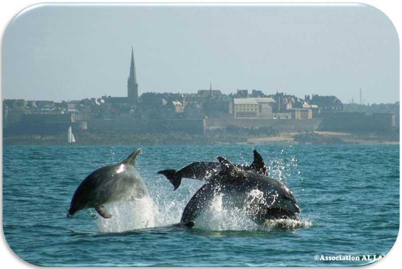 Découvrir les dauphins de Bretagne