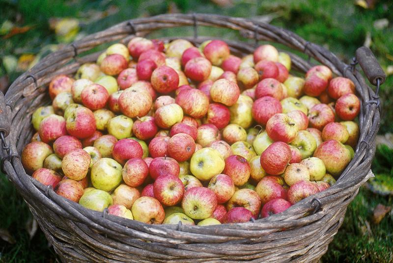 pomme-cidre-bretagne-secrete